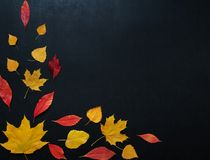 Autumn Composition With Color Leaves Ornament On Balck Slate Board With Copy Space. Bright Maple Foliage Season Autumn Text