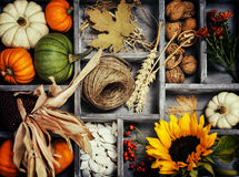 Autumn composition Stock Images