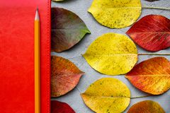 Autumn composition with workspace with orange leather notebook, pencil and beautiful color autumn leaves. Top view, flat lay. Autumn relax concept royalty free stock image