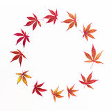 Autumn composition. Wreath frame of autumn maple leaves on white background. Flat lay, top view Stock Photography