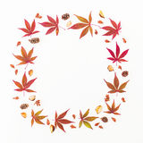 Autumn composition. Wreath frame made of autumn maple leaves, pine cones on white background. Flat lay, top view Royalty Free Stock Images