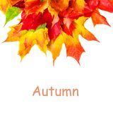 Autumn composition with yellow maple leaves  isolated on white b Royalty Free Stock Photography
