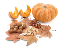 Autumn compositionl gifts of nature. Royalty Free Stock Photography