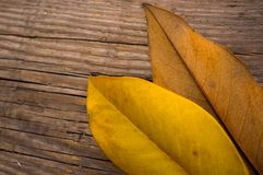 Autumn concept Royalty Free Stock Images