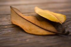 Autumn concept Stock Images