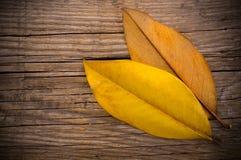 Autumn concept Royalty Free Stock Photo