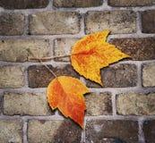 Autumn Concept Royaltyfri Bild
