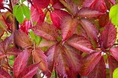 Autumn concept. Stock Photos