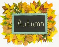 Autumn concept. Colorful autumn leaves frame. Autumn background. Chalkboard on autumn leaves background Royalty Free Stock Photo