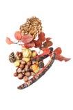 Autumn concept decoration Stock Photography