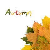 Autumn concept isolated Stock Image