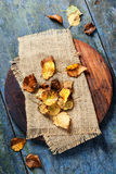 Autumn concept with leaves Royalty Free Stock Photos