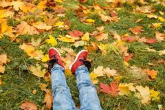 Autumn Concept. Legs wearing Red Shoes on Green Grass. And Fall Leaves Outdoors Stock Photos