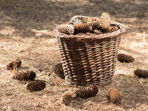 Autumn concept with pine cones Stock Photography