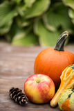 Autumn Concept Pumpkins y Apple y calabazas Foto de archivo libre de regalías