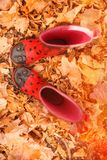 Autumn concept. Rubber children`s boots against the background of withered foliage stock photos