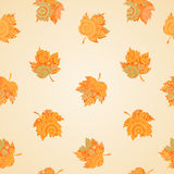 Autumn concept seamless pattern. Royalty Free Stock Photography