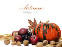 Autumn Royalty Free Stock Image