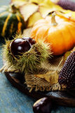 Autumn concept with seasonal fruits and vegetables Stock Images