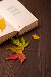Autumn concept. Sentimental poetry Stock Images
