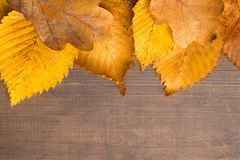 Autumn concept with textured yellow dirty leaves over wooden bac Stock Photos