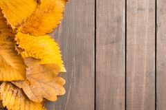Autumn concept with textured yellow old leaves over wooden backg Stock Images