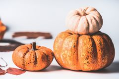 Autumn concept. Various pumpkins on white background with fall leaves, front view. Harvest vegetables , Thanksgiving food royalty free stock photo