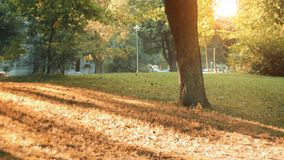 Autumn concept. Wide angle grass and sunlight with old tree. stock video footage