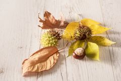 Autumn concept on the wooden background Royalty Free Stock Photography