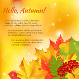 Autumn congratulation banner. Autumn orange, red, green maple leaves and rowan laying in the corner on colorful background. Cartoon vector illustration. Concept royalty free illustration