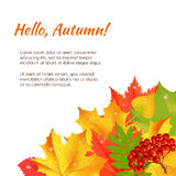 Autumn congratulation banner. Autumn orange, red, green maple leaves and rowan laying in the corner on white background. Cartoon vector illustration. Concept vector illustration