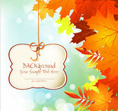 Autumn congratulatory background with leaves Stock Photos