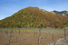Autumn in Conguillio National Park, Chile Royalty Free Stock Photos