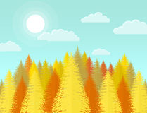Autumn coniferous pine forest. Nature landscape with yellow tree Royalty Free Stock Images