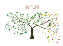 Autumn is coning tree Royalty Free Stock Photography