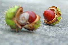 Autumn conker seed pod Stock Photos
