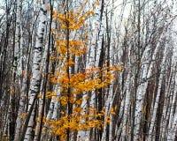 Autumn Contrast Lizenzfreie Stockfotos