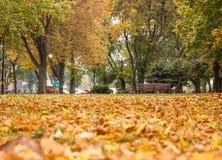 Autumn Contrast Stockbilder