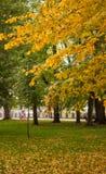 Autumn Contrast Stockfotografie