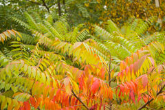Autumn Contrast Lizenzfreie Stockbilder