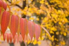 Autumn Contrast Stockbild