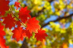 Autumn contrasts Stock Photo