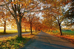 Autumn contry road Stock Photos