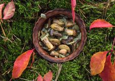 Autumn Cooking champinjoner bakade champinjoner för skogvit champinjoner Arkivbild