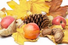 Autumn  copia Stock Image