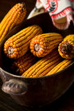 Autumn corn Stock Images