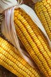 Autumn Corn. In  a basket Stock Photos