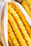Autumn Corn Stock Photography