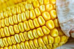 Autumn Corn Stock Image