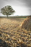 Autumn corn field Royalty Free Stock Photography